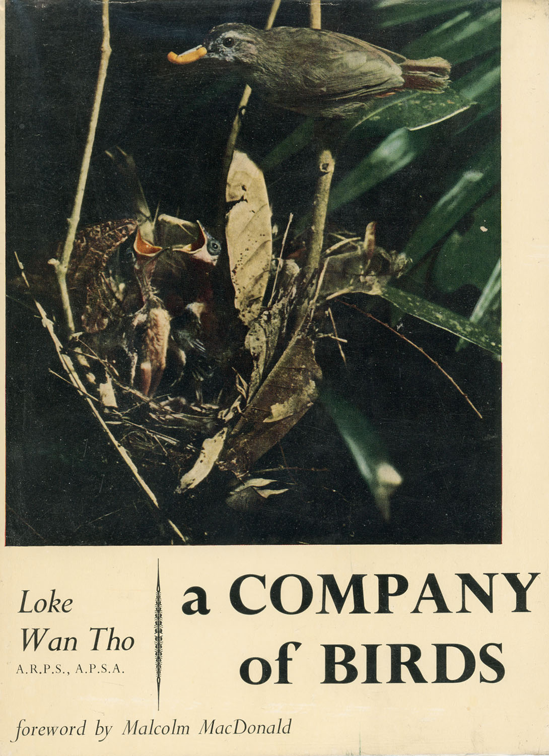 Loke Wan Tho – A Company of Birds