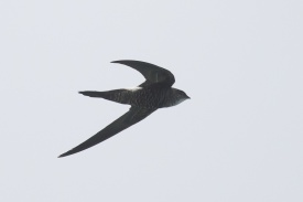 Pacific Swift at Singapore Strait