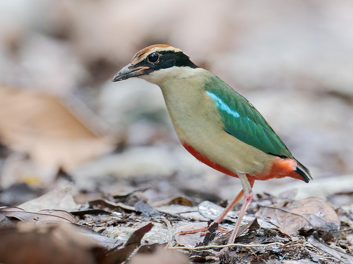Bird List revision for November2019