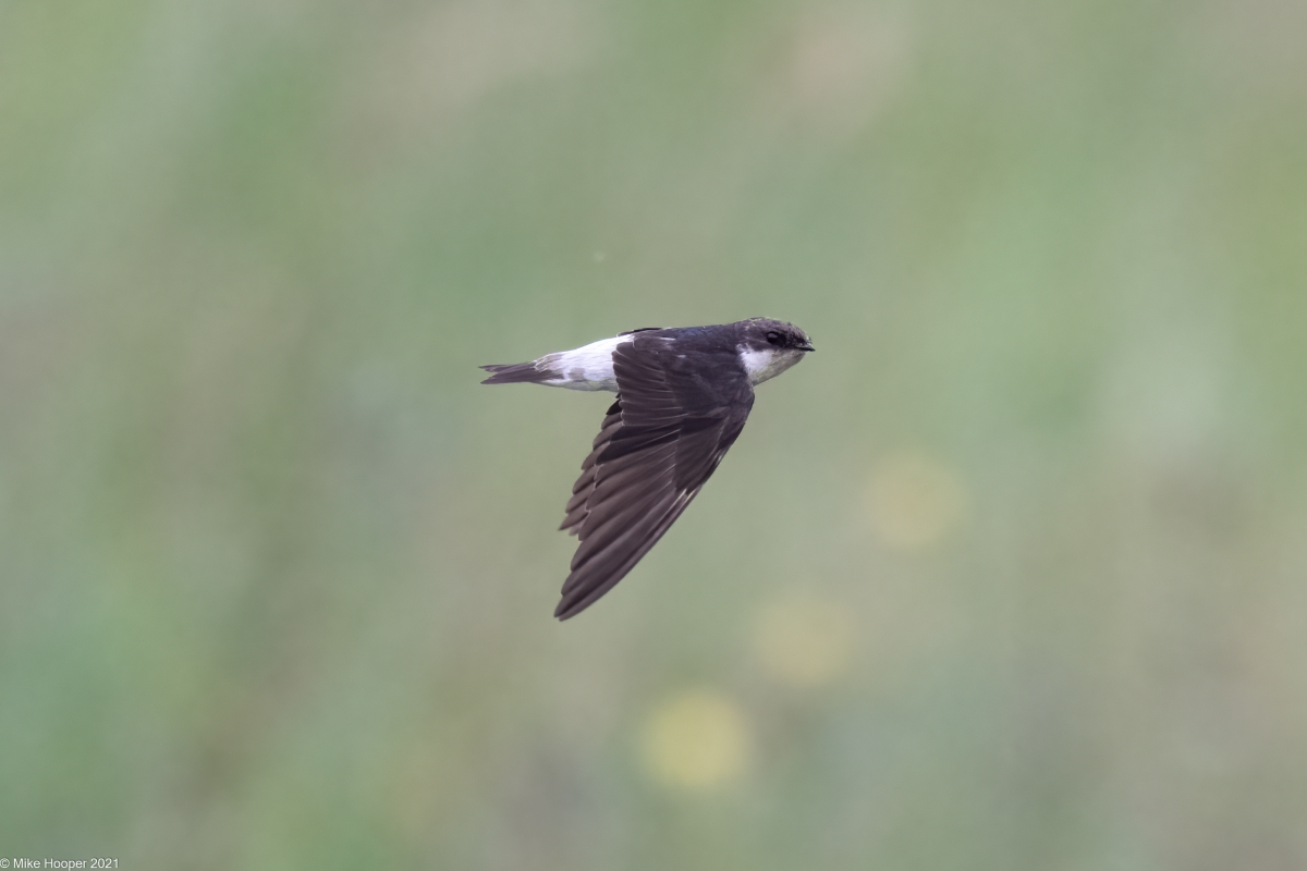 Bird List Revision for July2021